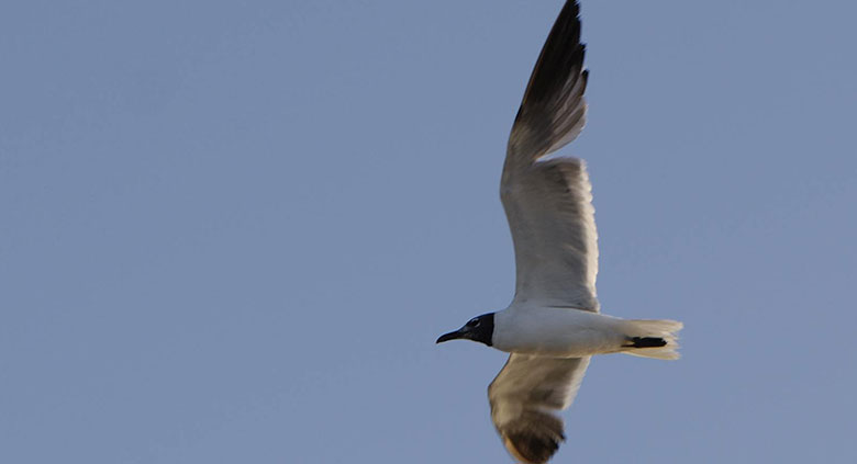 ibis-rouge-6